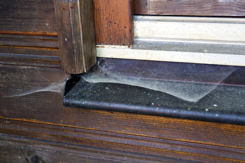 5 Natural Ways to Spider Proof Your Home
